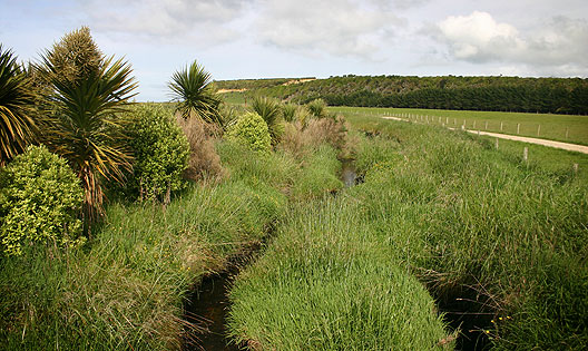 Waimotu stream riparian strip 5 years after fencing.